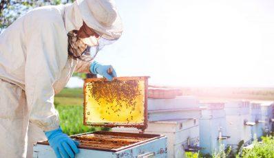 Wie viel Honig aus dem Bienenstock