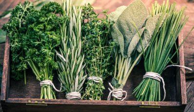 Wie man Kräuter im Garten und zu Hause pflanzt